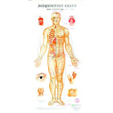 CHART ACUPUNCTURE 4pk