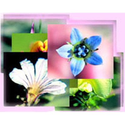 FLOWER AFFINITY DIAGNOSIS CARDS