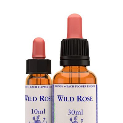 WILD ROSE BACH FLOWER REMEDY 10ml *DISC*